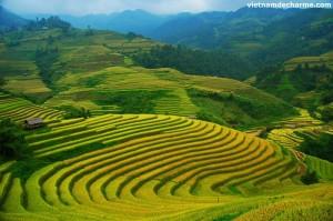 Les rizières en terrasse de Mu Cang Chai