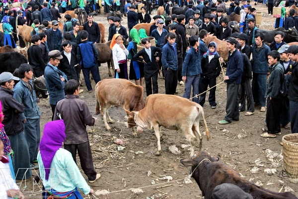 marche aux Vaches de Meo Vac