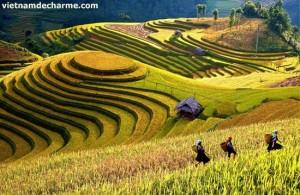 Riziere en terrase a Mu Cang Chai