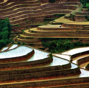 Les rizières en terrasses au village Luoc, Hoang Su Phi