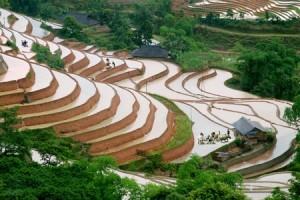 Les rizières en terrasses au village Thong Nguyen, Hoang Su Phi