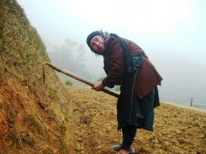 Les auteurs des rizières en terrasses : les La Chi, Dao et Nung
