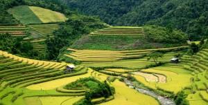 Rizières en terrasses à Hoang Su Phi