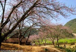 Le printemps au Tay Bac