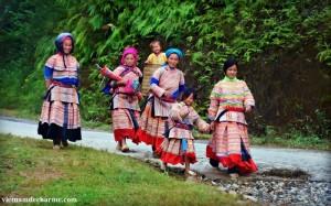 Les Hmong fleur à Si Ma Cai, province de Lao Cai