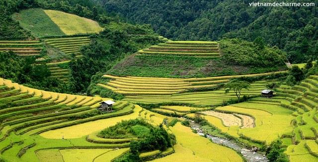 Les rizières en gradins sue la route vers Hoang Su Phi