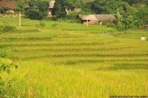 Les rizières en gradins sue la route vers Bac Quang