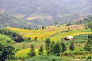 Les rizières en terrace a Yen Minh