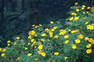 fleur Da Quy