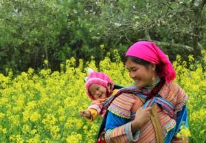 Des champs fleurs de sénevés blanches à Moc Chau