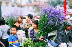 nouvel-vietnam-2012